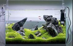 Green & rock aquarium www.ibrio.it your aquarium born here ! il tuo acquario nasce qui ! https://www.facebook.com/ibrio.it #ibrio #acquario #acquari #acquariologia #acquariofilia #aquarium #aquariums #piante #natura #pesci #zen #design #arredamento #layout #layouts #layoutdesign #roccia #roccie  #moss #freshwater #plantedtank #aquadesignamano #tropicalfish #fishofinstagram #aquaticplants #natureaquarium #nanotank #reefkeeper #nanoreef #saltwateraquarium