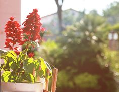 FlowerPower in my home~