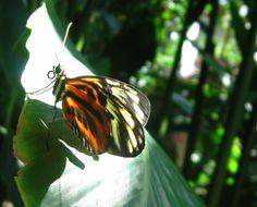Pretty Flutterby by laurapalmerwashere.deviantart.com