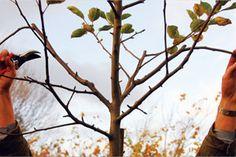 Les branches restantes recoivent plus de lumière