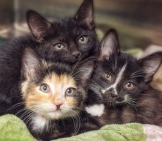 Check out these three kitties……..WANT!!!!