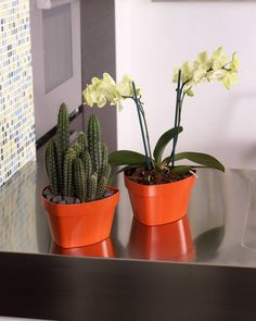 Maceta Mitu Tre - Mitu Tre pot  Medidas - Size cm. 14 (cm. 15 x 145 x 89 h.) lt. 1 cm. 17 (cm. 18 x 17 x 11 h.) lt. 17  #decoracion#decor#home #homeandgarden#florist#floristeria #instadecor#pottery#casa#casayjardin #pot#decoration#deco#decoração#casayjardin#casa #homeandgarden#home#jardin#florist #floristeria#macetas #housedecor#florista#plantas#plants #plant#floreria#plantbox #jardinera#jardineria #cachepot #homedesign #gardencenter #garden #vivero