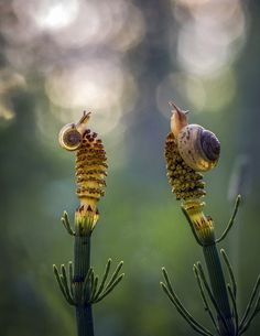 "stripeysnail: ""  Source: Snails by AnatoliH """