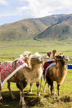 Kyrgyzstan is an incredible travel destination for adventure and outdoor lovers. It's also home to the World Nomad Games, a celebration of nomadic life. Here are 19 travel tips you need to know before you go.