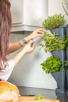 Minigarden Corner grau | Kitchen Gardening #kitchengarden
