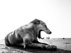 Poignant, Playful Photos of the Stray Dogs of India - Feature Shoot