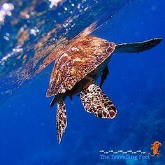 The Great Apo Island Freediving Adventure - Visayas, Underwater, Philippines, Travelling, Shots, Island, Adventure, Animals, Animales