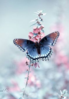 Amazing butterfly photography: you will not be able to stop looking! Butterfly Wallpaper, Butterfly Flowers, Butterfly Wings, Beautiful Bugs, Beautiful Butterflies, Beautiful Creatures, Animals Beautiful, Marvel Photo, Amazing Animal Pictures