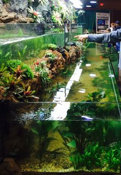 Our Riverbank Tank as seen at The Aquatic Experience Chicago consists of 2 tanks each 41 feet long for a combined 3,800 gallons.