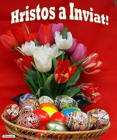 Hristos a Inviat , Paste fericit Easter Flowers, Holidays And Events, Happy Easter, Spring Time, Happy Halloween, Christmas Bulbs, Diy And Crafts, Holiday Decor, Birthday