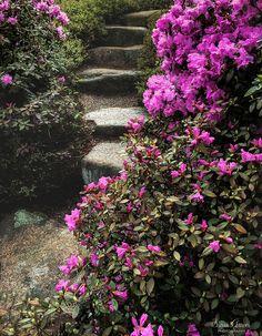 https://flic.kr/p/UHAM6H | Asticou Azalea Gardens Maine