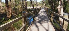This boardwalk provides an excellent opportunity to enjoy the natural attributes of the wetlands and gives bird watchers greater access to enjoy their passion. Flood Mitigation, Bird Watching, Ecology, Bouldering, Perfect Place, Habitats, Fresh Water, Surfing, National Parks