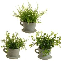 SINCERELY FOREVER INVENTORY Small ceramic tea cups with ferns. Rental rate $3 each.