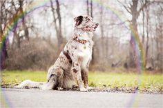 - RAINBOW - | Flickr - Photo Sharing!