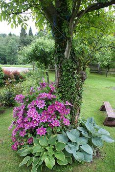 aranżacje ogrodów zdjęcia - Szukaj w Google