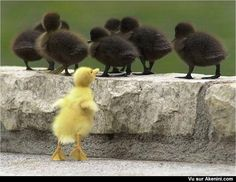 Le vilain petit canard  -The ugly Duckling