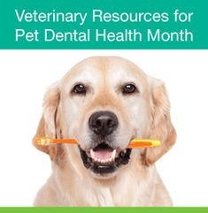 February is National Pet Dental Health Month: Resources from the AVMA Complete List