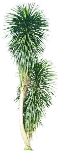 33 Ideas Tree Plan Psd Tropical Plants For 2019 Landscape Elements, Landscape Concept, Landscape Architecture, Landscape Design, Green Plants, Tropical Plants, Photoshop, Tree Psd, White Flowering Trees
