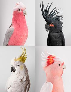 Nature Animals Birds 32 Ideas For 2019 Pretty Birds, Beautiful Birds, Animals Beautiful, Cute Animals, Tropical Birds, Exotic Birds, Colorful Birds, Tropical Animals, Exotic Pets