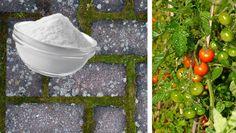 Bikarbonat är inte bara ett givet inslag i skafferiet. Med bikarbonat kan du rensa grillgallret, få sötare tomater och tvätta utemöbler. Här är sex oväntade tips att testa i trädgården.