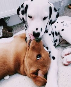 Dog And Puppies Golden Retriever .Dog And Puppies Golden Retriever Super Cute Puppies, Super Cute Animals, Cute Dogs And Puppies, Cute Little Animals, Baby Dogs, Cute Funny Animals, Doggies, Puppies Puppies, Pets