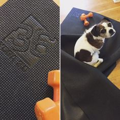 Yoga mat or puppy blanket?!?!???? Our Square36 Yoga mat is designed for yoga and stretching without shoes or puppy claws! (not intended for use for dogs:) This mat is the perfect mat for stretching with weights. www.square36.com #dog #dogsofinstagram #weights #yogaeverydamnday #yoga #yogi #yogalove #yogalife #yogaeverywhere #square36mats #workout #yogamat #stretch #fitness #lola #mydog #doglover #dogmodel #mutt #pose #yogapose