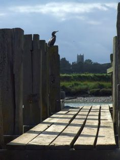 A cormorant suns himself on a mooring post at Southwold harbour. St. Andrews church in Walberswick is visible across the Blyth river.