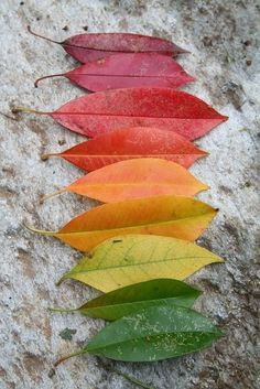 Colors of autumm...a row of leaf 'lips' like kisses from nature <3