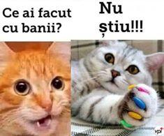 Funny Cats, Funny Animals, Cat Memes, Funny Moments, Cringe, My Hero, Bff, Haha, Jokes