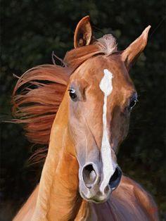 Online Contest - Favorite Horse - Fine Art America