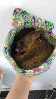 Knitting And Sewing Pouches For Possums And Smaller
