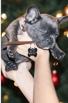 Marriage Proposal Ideas from HowHeAsked Karlie and Alec's Incredible Christmas Puppy Proposal Romantic Proposal, Perfect Proposal, Wedding Proposals, Marriage Proposals, Puppy Proposal, Proposal Ideas, Propositions Mariage, Christmas Proposal, Christmas Engagement