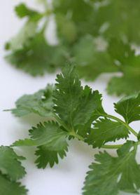 Fat Flush Recipe: Top 3 Fat Flushing Herbs