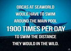 Boycott SeaWorld. Orca abuse. Animal rights. Watch Blackfish.