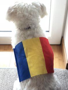 """🇹🇩#LaMulțiAniRomânia!💙💛❤️  """"Încă mă uit după o Românie cinstită..."""" 🐶#ZAGbichon"""