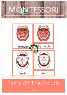 Montessori 3-Part Nomenclature Cards - Parts Of The Mouth - Montessori Nature Blog - Learning Activities - Montessori Homeschooling