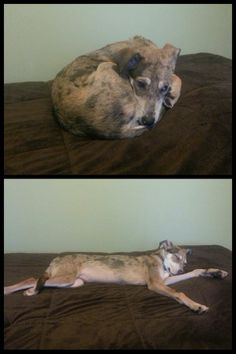 Before and after the heat got turned on #cute #heat #entertainment #interesting