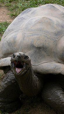 Harriet (tortoise) - Wikipedia, the free encyclopedia
