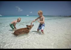 Fowl Cay Resort - In Photos: Fowl Cay Resort In The Bahamas