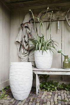 Good Tipps Blumenk bel Euro Sie K nnen Elfenbein G rten Nebenhaus Verkauf Pflanzen