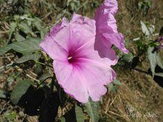 Flor do mato     -    Flower bush
