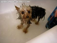 Yes, they look like wet rats.