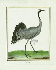 Martinet c1770's: Grue Crane