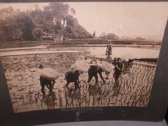 CABINET PHOTO JAPANESE MEN IN WATER IN TRADITIONAL ATTIRE TRANSPLANTING RICE Philadelphia Museums, Antique Cabinets, Japanese Men, Rare Photos, Worlds Largest, Rice, Traditional, The Originals, Antiques