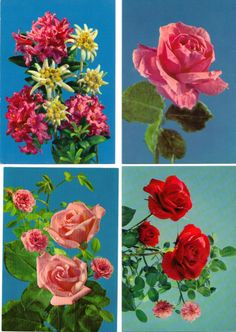 LOT 8 VINTAGE POSTCARDS NOS NEW OLD STOCK FLOWERS ROSES ++ 40$