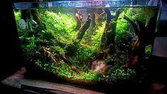 Acuario3web (@acuario3web)   Twitter Aquarium Aquascape, Aquascaping, Nano Tank, Fish Tanks, Going Fishing, Freshwater Aquarium, Scp, Pet Stuff, Terrariums