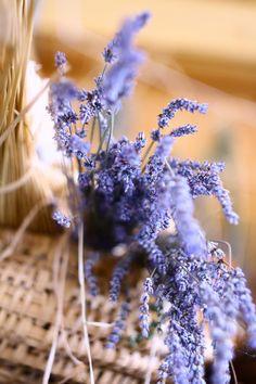 Purple blur by Theodore Kuburic - Freshly picked lavander Provence Lavender, Lavender Cottage, Lavender Fields, Lavender Color, Lavender Flowers, Love Flowers, Lavender Tea, Lavenders Blue Dilly Dilly, Malva