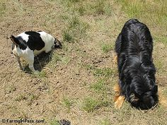 Bert and Bear on the Mole Patrol! One of 27 photos in the latest Friday Farm Fix on Farmgirl Fare.