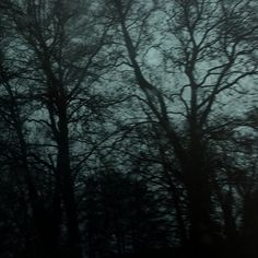 Dark Green Aesthetic, Nature Aesthetic, Twilight, Dark Paradise, Forest Fairy, Dark Forest, Swagg, Pretty Pictures, Aesthetic Pictures