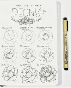 How to draw flowers and turn these drawings into really cool wall art - Craft-Mart how to draw a rose step by step drawing guide. Learn how to draw flowers like roses of lilies and turn them into really beautiful wall art. Simple Flower Drawing, Peony Drawing, Easy Flower Drawings, Flower Drawing Tutorials, Flower Sketches, Floral Drawing, Art Drawings Sketches, Easy Drawings, Art Tutorials